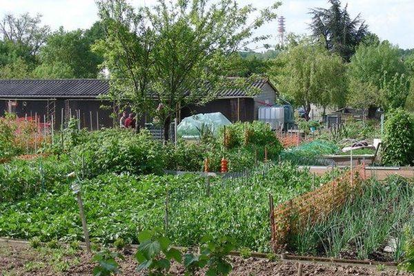 Des jardins familiaux en mai