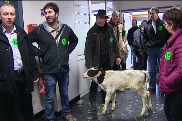 Le 8 janvier à Aurillac (15), la FDSEA est venue protester, avec un petit veau, dans les locaux de la Direction Départementale de la Cohésion Sociale et de la Protection des Populations.