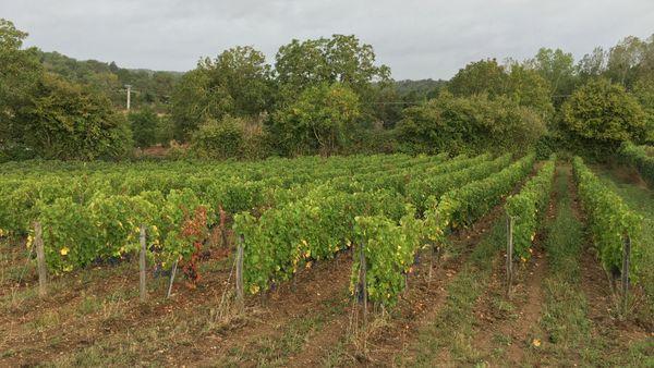 Respecter la nature, le cycle de la lune et les saisons, un principe de base pour produire du vin naturel.
