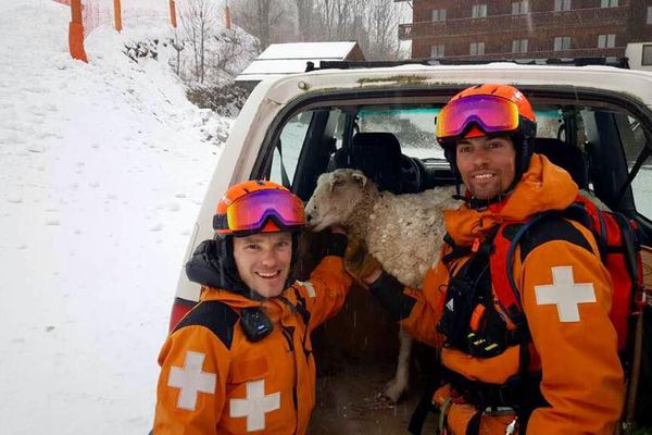 La brebis, au chaud dans la voiture, entourée par 2 de ses sauveteurs.