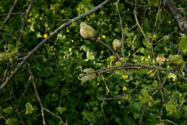 Le printemps bourgeonne