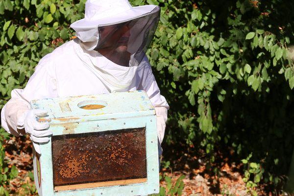 Le Poitou-Charentes compte 1547 apiculteurs ( chiffres du recensement 2015)
