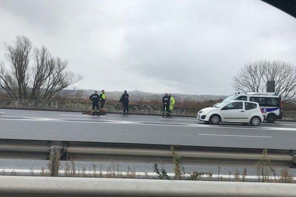 Le bovin avait provoqué un accident entre deux voitures, faisant un blessé léger, sur l'autoroute A72, près de Saint-Etienne.