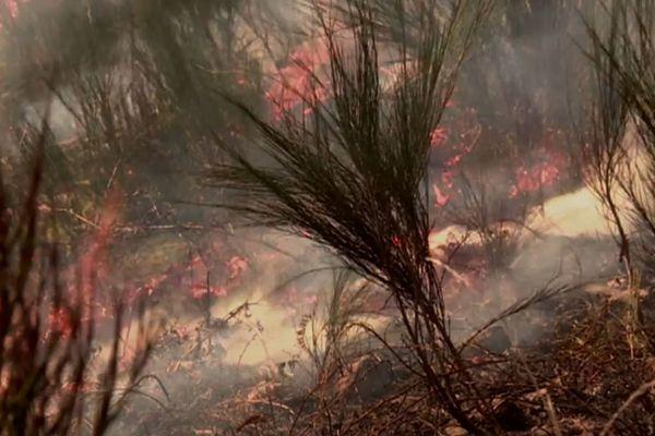 """Les """"brûlages dirigés"""" permettent d'éliminer les broussailles qui propagent les incendies de forêt en saison sèche."""