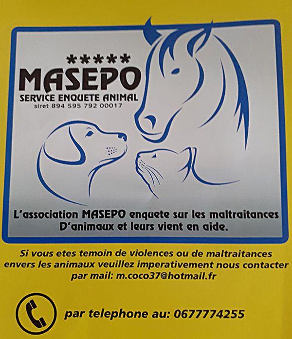L'association MASEPO enquête sur les maltraitances d'animaux et leurs vient en aide.