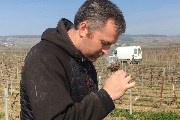 """Alexis Leconte en pleine """"dégustation"""" de la terre issue de ses vignes."""