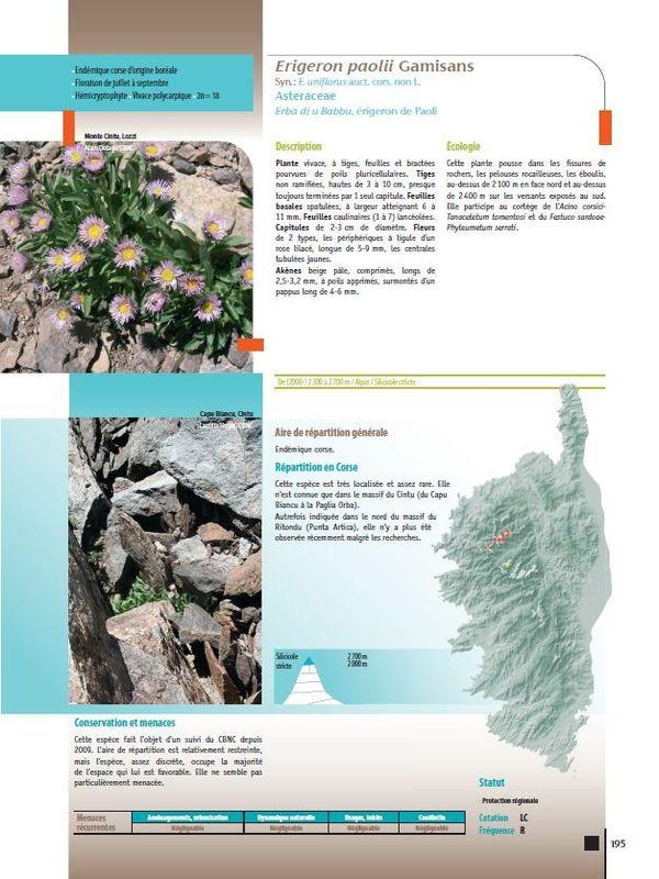 La fiche de présentation de l'Erigeron Paolii tirée de L'Atlas biogéographique de la flore corse.