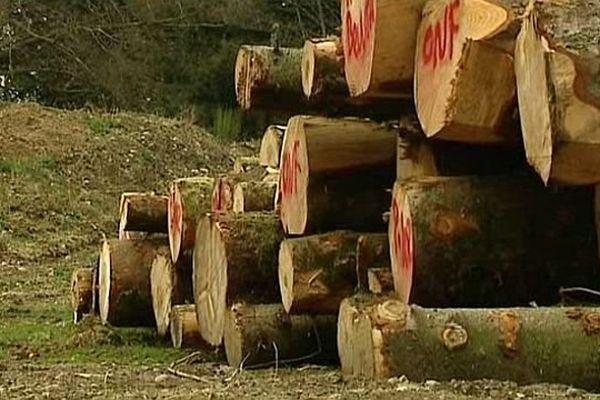 En 2013, la filière bois française a vu le prix du bois augmenter de 10,4%
