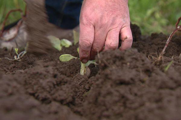 Les jardiniers s'activent après les saints de glace