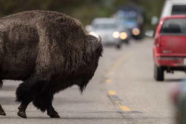 Bison futé voit vert. Bison futé voit rouge. Bison futé voit noir. Bison futé voit tout.