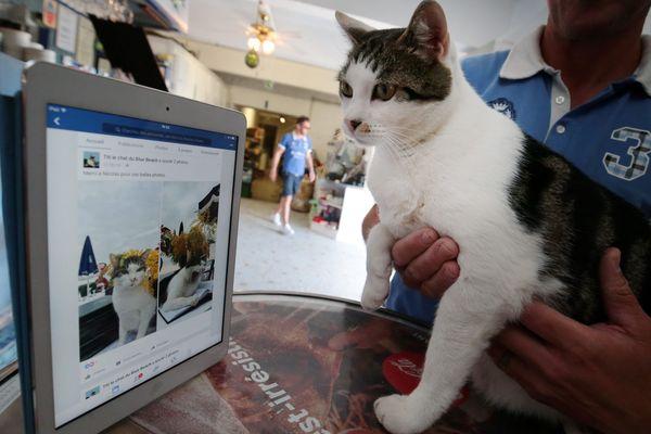 Le chat Titi devant sa page Facebook...