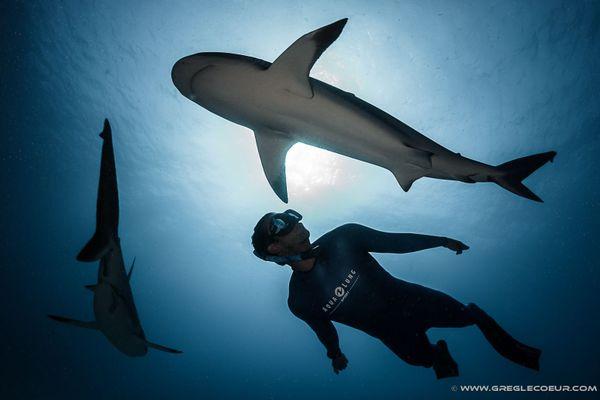 Pierre Frolla, au milieu de frands animaux marins dans l'océan.