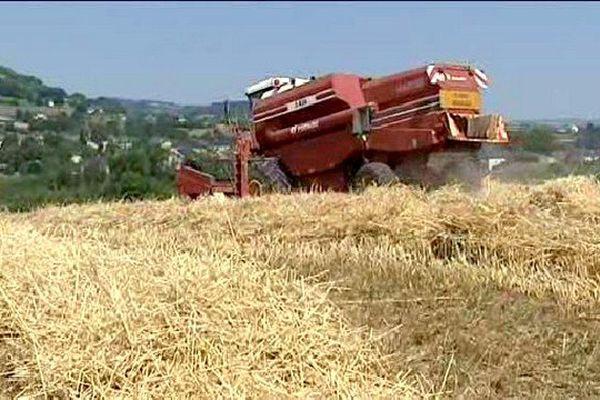 La sécheresse sévit depuis mi-juin en Corrèze. La canicule n'a fait qu'aggraver la situation.