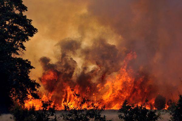 En 2012, 650 hectares de pins étaient détruits dans un feu de forêt à Lacanau en Gironde.