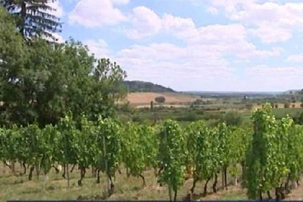 Le vignoble, à Bruley (54).