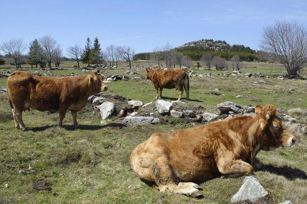 Le Fin Gras du Mézenc est une viande produite entre Haute-Loire et Ardèche.