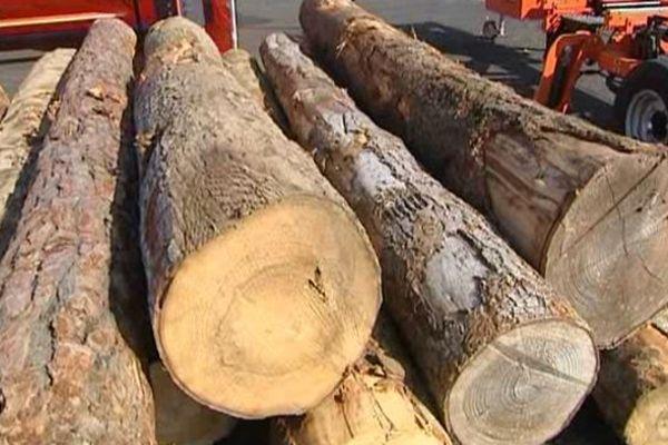 L'Auvergne possède l'une des plus grandes capacités de production de bois de France. 700 000 hectares, soit 26% du territoire régional. Soit 5,8 millions de m3 de bois produits chaque année.