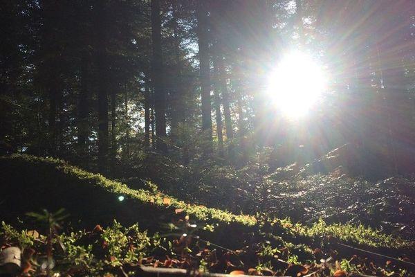 Pour pratiquer le Shinrin Yoku, il suffit d'avoir une forêt à proximité