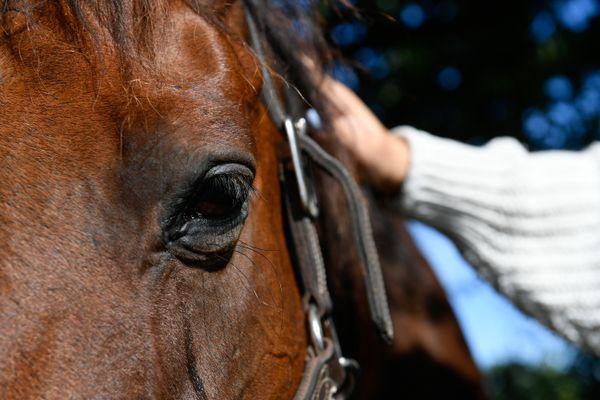 L'inquiétude grandit à nouveau pour les propriétaires de chevaux