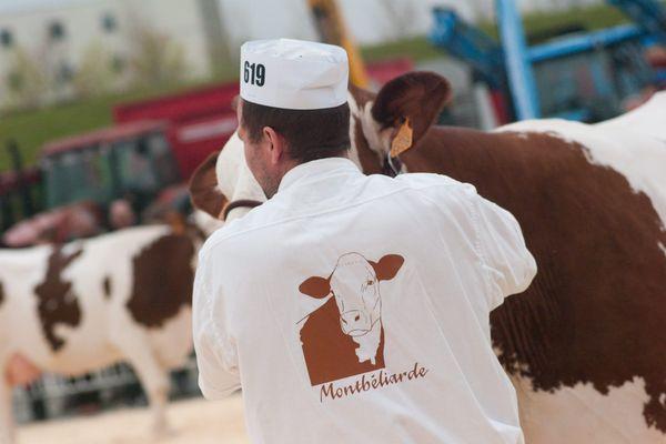 Les vaches de race montbéliardes ne pourront pas monter à Paris. Le salon de l'agriculture 2021 est annulé en raison de l'épidémie de Covid-19.