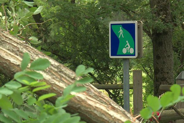Des arbres sont tombés sur le tracé de la voie verte.