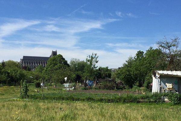 Les jardins potagers des marais de Bourges