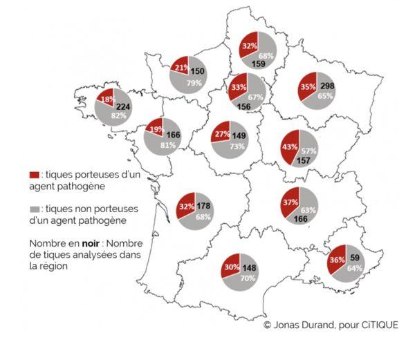 La Bretagne est plus épargnée par les tiques porteuses d'un agent pathogène que les régions de l'Est de la France.