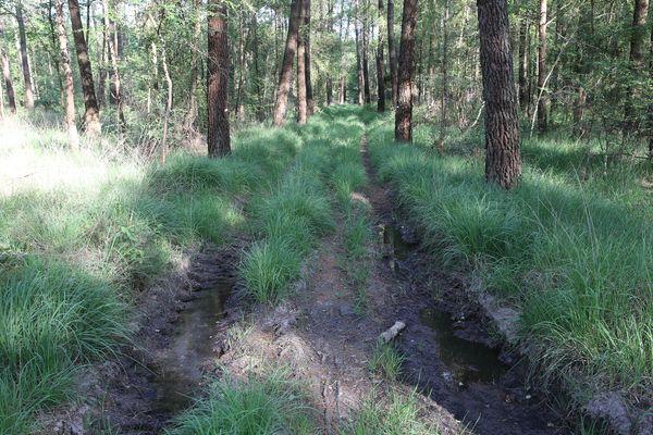 À l'ombre des arbres, l'eau de pluie est encore apparente et ne s'évapore que lentement. Dans le sol qui reste frais, une quantité importante d'eau tombée durant l'automne 2019 et l'hiver 2020