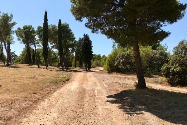Dans l'Aude, la commune de Lézignan-Corbières a créé de nouvelles pistes pour mieux protéger sa pinède et les habitations les plus proches.