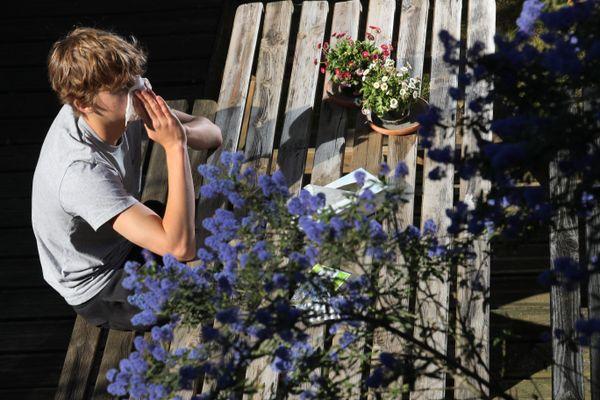 Alerte aux allergies aux pollens