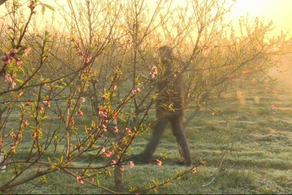 Les arboriculteurs ont subi d'importants dégâts à cause d'une vague de froid inédite.