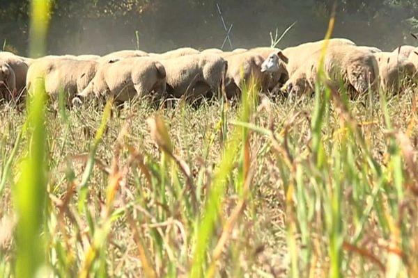 Neuf conventions ont été signées entre des éleveurs et la DIRCO.