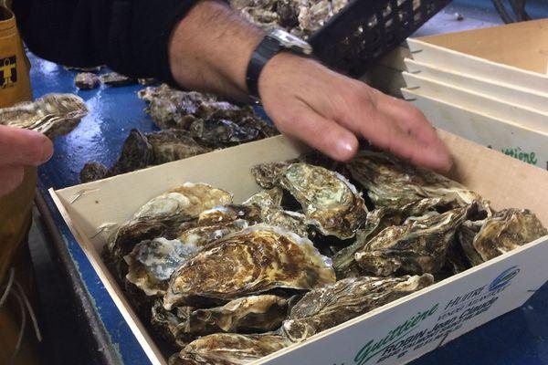 Avant l'arrivée d'une pollution éventuelle, les ostréiculteurs se dépêchent de remonter un maximum d'huîtres.