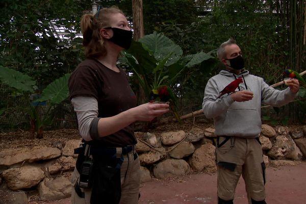 Dix employés sur vingt viennent encore sur le site Biotropica pour s'occuper des animaux