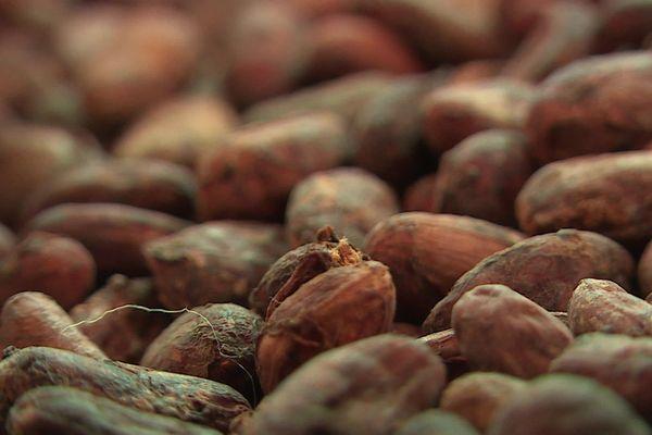 Les fèves de cacao importées des 4 coins du globe par la maison Duplanteur à Grasse.