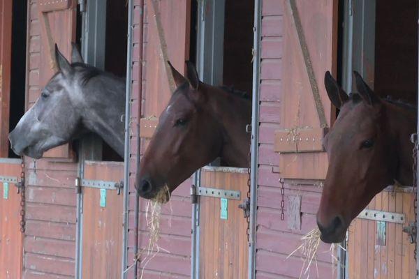 Les chevaux ont été rassemblés au centre équestre de Poitiers.