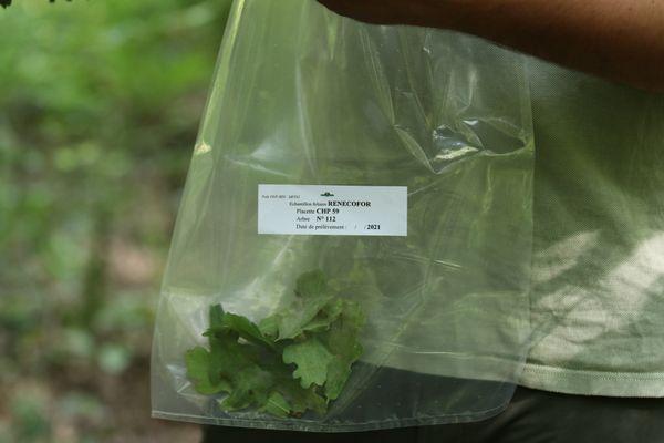 Les prélèvements de feuilles sont ensuite analysés dans un laboratoire de la région bordelaise.