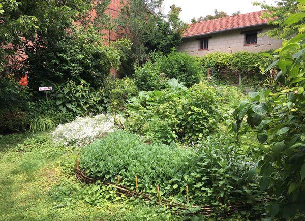 Le jardin de Brigitte offre différents niveaux de végétation pour abriter les oiseaux de toutes tailles.