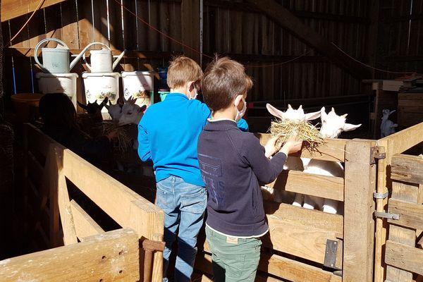 Lise 6 ans, Baptiste 9 ans et son frère Benjamin 6 ans, découvrent les chevreaux nés ces dernières semaines