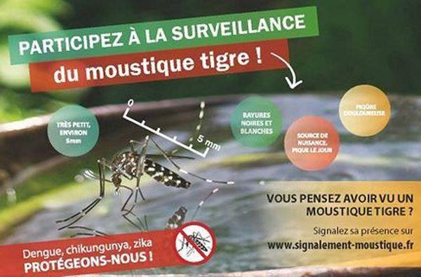 Le moustique tigre ne mesure pas plus de 5 mm, il a des rayures noires et blanche, et il pique le jour.
