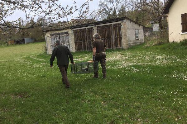 Les campagnes de piégeage concernent souvent les élevages et les cultures