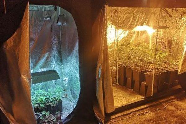 Deux chambres de culture de cannabis ont été découvertes à Joze, dans le Puy-de-Dôme, par les gendarmes de Lezoux, lundi 4 novembre.