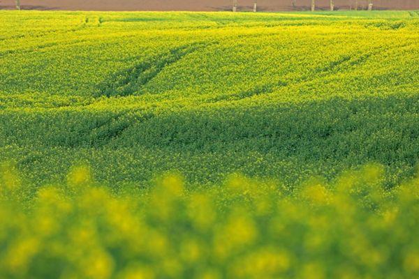 L'ozone est un polluant difficile à éliminer. L'agriculture est à la fois victime et en partie responsable de sa progression, notamment en Auvergne-Rhône-Alpes, où un plan inédit va être lancé par la Dreal