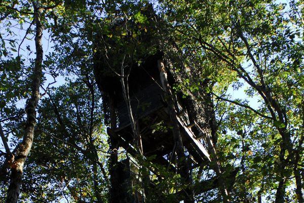 Une palombière posée à la cime des arbres (image d'illustration)