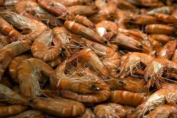 1,5 tonnes de crevettes pêchées illégalement va être distribué à deux associations caritatives.