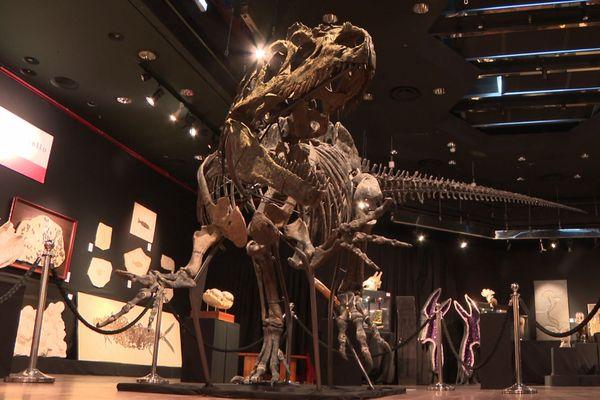 Le squelette est estimé entre 1 et 1,2 million d'euros.