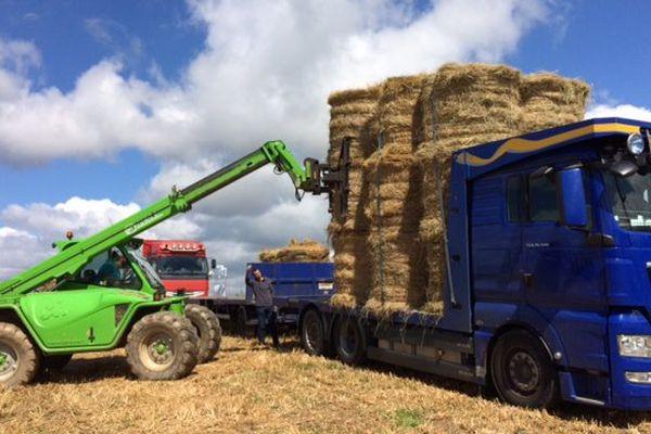 Des agriculteurs de Haute-Loire vont livrer du foin à des agriculteurs du Cantal.