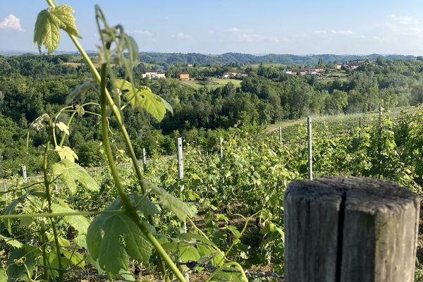 A perte de vue: des collines, des vignes et des chênes...parfois d'Auvergne