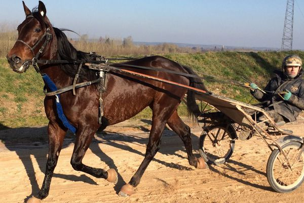 BoldEagle à l'entraînement au Ménil-Bérard sur la piste de l'écurie Guarato
