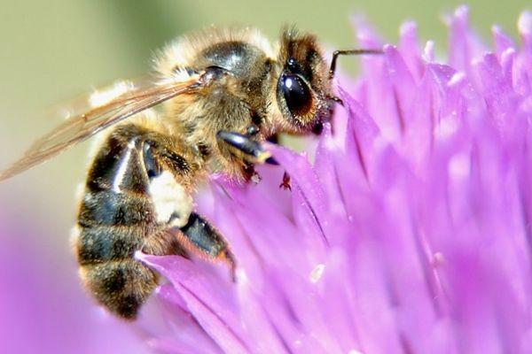 Disparition de colonies d'abeilles, surcroît de travail et baisse de la production de miel. C'est dans ce contexte que des professionnels de l'apiculture se réunissent durant deux jours, à Saint-Ours-les-Roches, dans le Puy-de-Dôme.